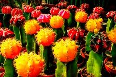 Pianta del cactus colorata Immagine Stock Libera da Diritti