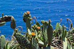 Pianta del cactus con il fiore Fotografia Stock