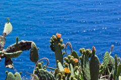 Pianta del cactus con il fiore Immagine Stock Libera da Diritti