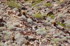 Pianta del cactus di vista splendida circondata della sabbia di pietra Bei ambiti di provenienza del paesaggio della natura su Gr Fotografia Stock