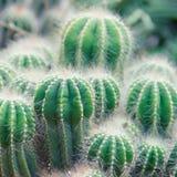 Pianta del cactus Profondità del campo poco profonda Fotografie Stock Libere da Diritti