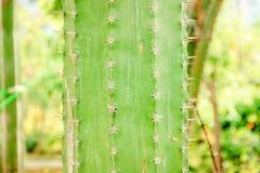 Pianta del cactus Profondità del campo poco profonda Fotografie Stock