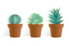 Pianta del cactus in vaso su fondo bianco Immagine Stock