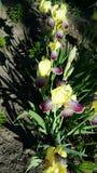 Pianta del fiore fotografia stock
