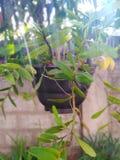 Pianta del fiore della pianta da vaso fotografie stock