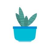 Pianta del fiore in un vaso blu Fotografie Stock