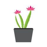 Pianta del fiore in un vaso scuro Fotografia Stock