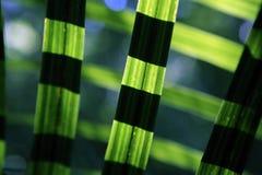 Pianta del lino in foresta con luce solare Immagini Stock Libere da Diritti