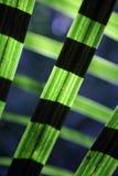 Pianta del lino in foresta con luce solare Fotografia Stock