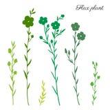 Pianta del lino, siluetta selvaggia di verde del fiore del campo isolata sull'illustrazione disegnata a mano bianca e botanica di royalty illustrazione gratis