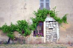 Pianta del vino che si allinea sopra la finestra su una costruzione Fotografie Stock Libere da Diritti