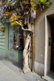 Pianta del wistaria giapponese che cresce il bello fiore blu della costruzione fotografia stock libera da diritti
