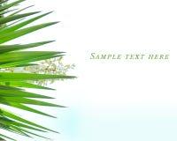 Pianta dell'agave con i petali bianchi dalla Croazia fotografia stock