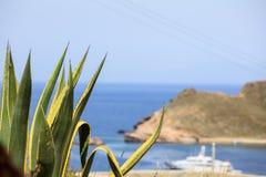 Pianta dell'agave sopra una costa greca dell'isola Immagine Stock