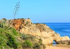 Pianta dell'agave sulla costa Fotografia Stock Libera da Diritti