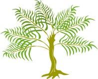 Pianta dell'albero della felce della giungla Immagine Stock