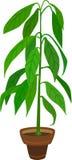 Pianta dell'avocado Fotografia Stock Libera da Diritti