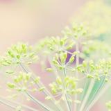 Pianta dell'erba su alba di mattina di estate Immagine Stock Libera da Diritti