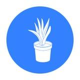 Pianta dell'ufficio nell'icona del vaso da fiori del Th nello stile nero isolata su fondo bianco Forniture di ufficio e simbolo i Fotografia Stock Libera da Diritti