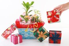 Pianta della Camera con i contenitori di regalo Fotografie Stock