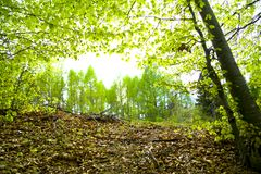 Pianta della foresta fotografia stock
