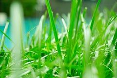 Pianta della giungla ed erba dell'ubriacone vicino a questa piscina pacifica Questo gusto della natura nel mio cortile posteriore immagini stock libere da diritti
