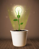 Pianta della lampadina che esce da vaso da fiori Immagine Stock Libera da Diritti