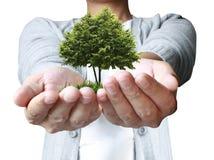 Pianta della mano, albero illustrazione vettoriale