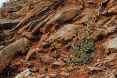 Pianta della montagna Fotografia Stock Libera da Diritti