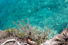 Pianta della scogliera del mare Fotografia Stock
