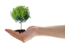 Pianta della tenuta della mano piccola, concetto di eco Immagini Stock Libere da Diritti