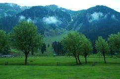 Pianta della valle di Betab in Pahalgam-7 Fotografia Stock