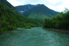 Pianta della valle di Betab in Pahalgam-9 Fotografie Stock