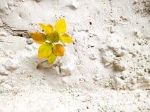 Pianta di autunno Fotografia Stock