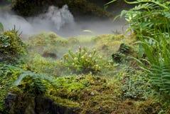 Pianta di brocca carnivora Immagini Stock