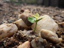 Pianta di Bulb Fotografia Stock