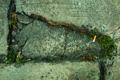 Pianta di caduta del fumo fotografia stock