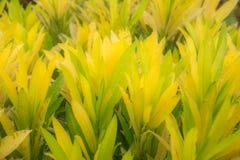Pianta di colore giallo e verde strutturata Fotografia Stock