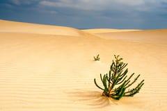 Pianta di deserto Immagini Stock Libere da Diritti