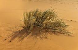 Pianta di deserto Fotografia Stock Libera da Diritti