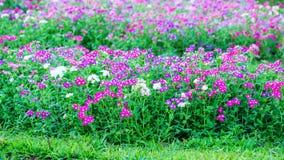Pianta di fioritura Fotografia Stock