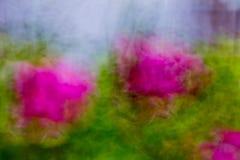 Pianta di fioritura astratta Fotografia Stock