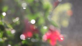 Pianta di fioritura con lo spruzzo d'acqua defocused archivi video