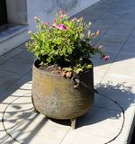 Pianta di fioritura decorativa in ghisa metallico Fotografia Stock