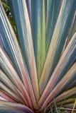 Pianta di giardino del lino della Nuova Zelanda fotografia stock libera da diritti