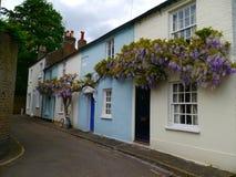 Pianta di glicine in cottage vittoriani della copertura piena del fiore in Twickenham Londra immagini stock