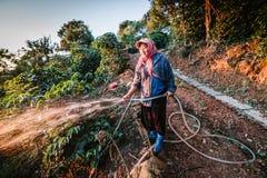 Pianta di innaffiatura del lavoratore in giardino Fotografie Stock Libere da Diritti