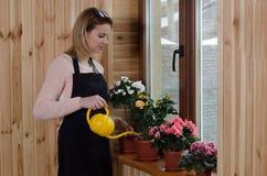 Pianta di innaffiatura della giovane donna facendo uso dell'annaffiatoio della plastica di colore Fotografia Stock Libera da Diritti