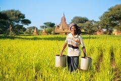 Pianta di innaffiatura tradizionale dell'agricoltore del Myanmar Fotografie Stock