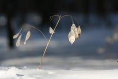 Pianta di inverno Immagine Stock